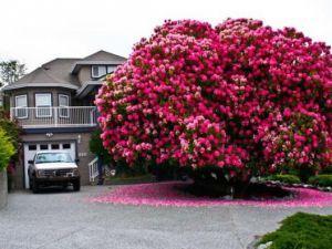 Dünya'nın en ilginç ağaçları