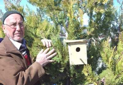 Fındık zararlısına karşı kuşları kullanın