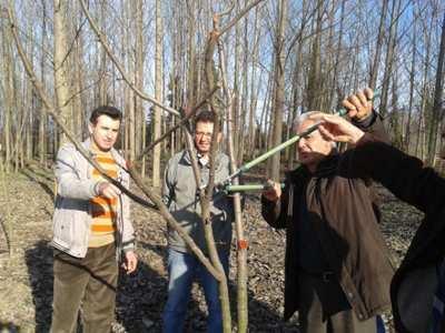 Akyazı'da ağaç budama kursu sona erdi
