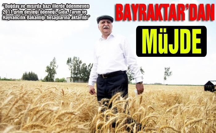 Sakarya'da da mısır için ödeme yapılacak