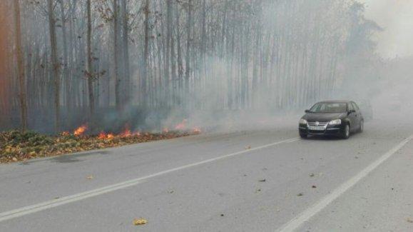 Anız yangını kavak ağaçlarına sıçradı!