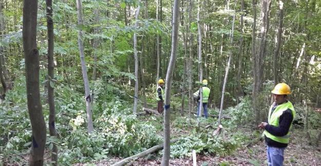 Orman ve Su İşleri Bakanlığı ormanlar için çalışıyor