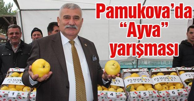 """Pamukova'da """"Ayva"""" yarışması"""