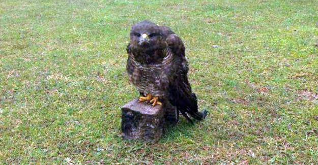 Vurulan kerkenez kuşu hayatını kaybetti