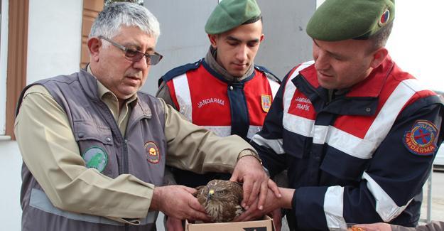 Yaralı şahine Jandarma şefkati