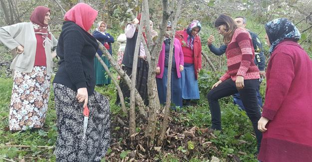 Karadenizli kadınlar fındıkta kaliteyi zirveye çıkaracak