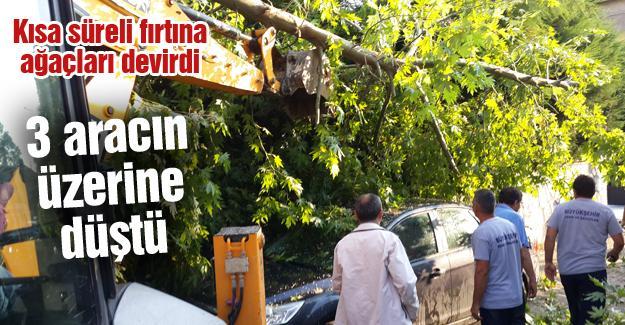 Kısa süreli fırtına ağaçları devirdi