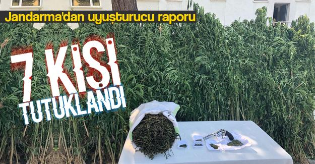 Jandarma'dan uyuşturucu raporu
