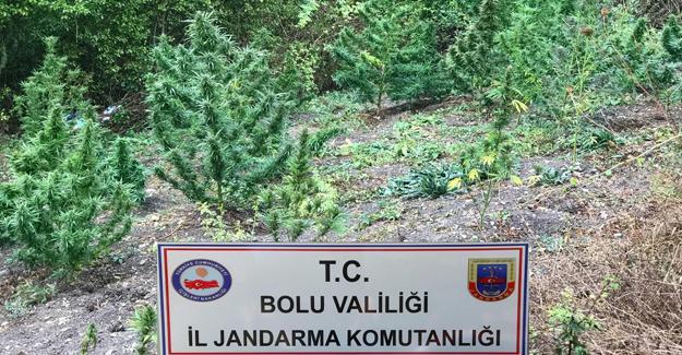 Jandarmadan Bolu-Düzce ve Sakarya'da uyuşturucu operasyonu