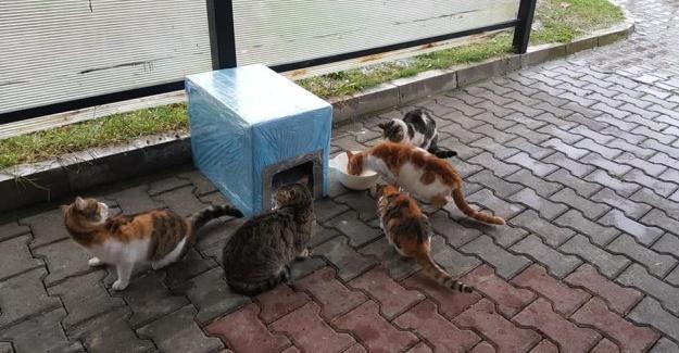 AK Gençlik'ten sokak hayvanları için seferberlik