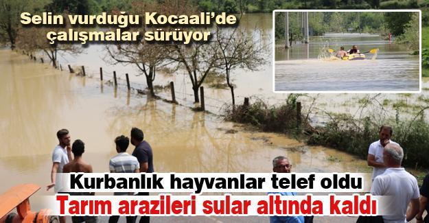 Kurbanlık hayvanlar telef oldu! Tarım arazileri sular altında kaldı