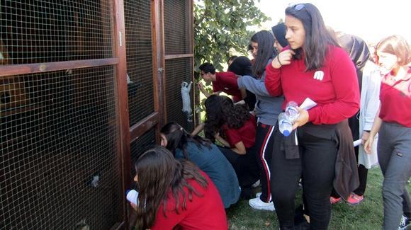 Hayvanları Koruma Günü etkinliklerle kutlandı