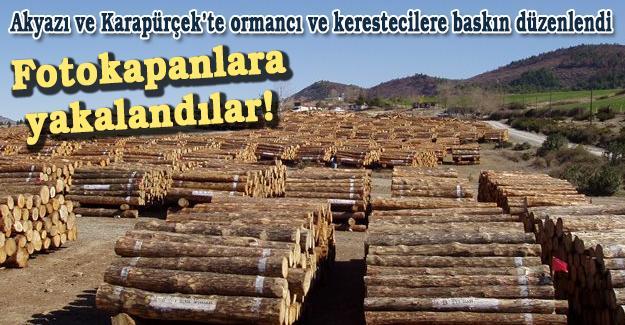 Akyazı ve Karapürçek'te ormancı ve kerestecilere baskın düzenlendi