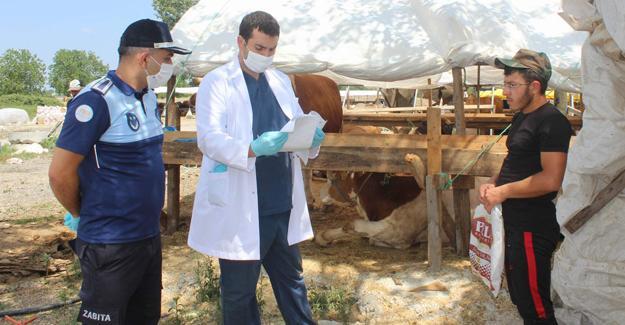 Arifiye Belediyesi kurban satış ve kesim yerlerini denetliyor