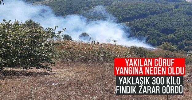 Cüruf yangınında 300 kilo fındık yandı