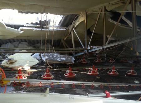 Kara dayanamayan tavuk besihanesinin çatısı çöktü