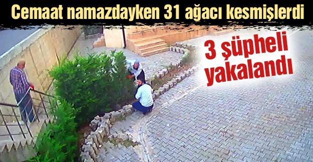 Cemaat namazdayken 31 ağacı kesen 3 şüpheli yakalandı