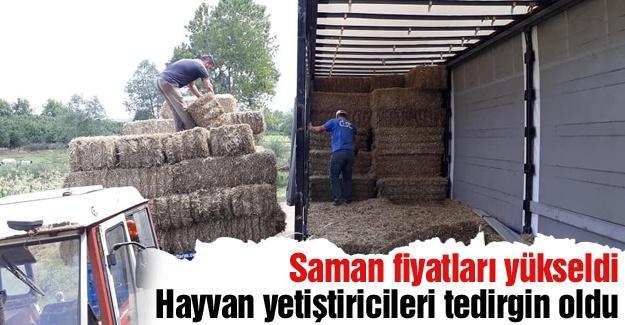 Saman fiyatları hayvan yetiştiricilerini tedirgin etti