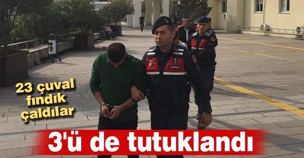23 çuval fındık çalmışlardı! 3'ü de tutuklandı