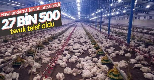 27 bin 500 tavuk telef oldu