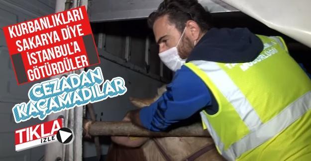 Kurbanlıkları Sakarya diye İstanbul'a götürdüler