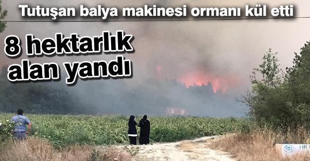 Taraklı'da 8 hektarlık alan yandı