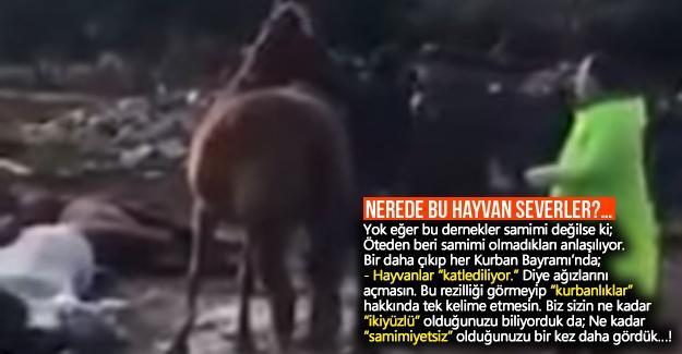 Nerede bu hayvan severler?…