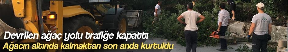 Devrilen ağaç yolu trafiğe kapattı