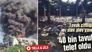Tavuk çiftliği alev alev yandı! 40 bin tavuk telef oldu